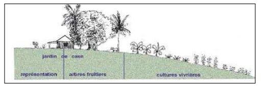 croquis d'un jardin creole - photo document Académie Guadeloupe (http://pedagogie.ac-guadeloupe.fr/files/File/hist_geo/geo_ressources_jardin_creole_pdf_48f78c8e1b.pdf)